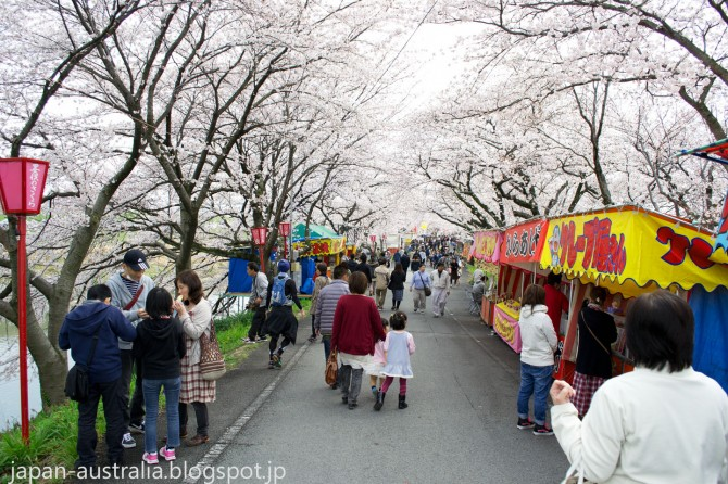 Sakura and Festival Food