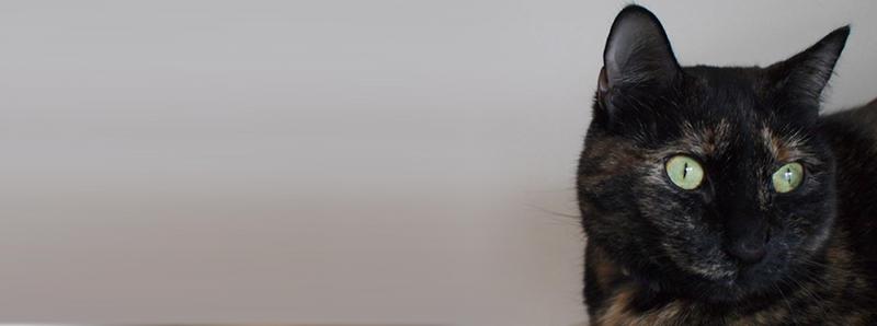 My cat, Tallis