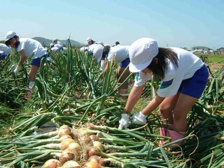 I0027911収穫作業